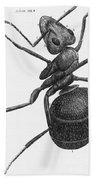 Hooke: Ant, 1665 Bath Towel