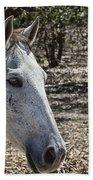 Horse With No Name V3 Bath Towel