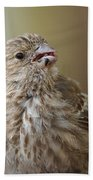 House Finch Profile Hand Towel