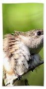 Hummingbird - Ruby-throated Hummingbird - Stretch Time Bath Towel