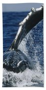 Humpback Whale Flipper Slap Hawaii Bath Towel