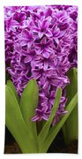 Hyacinth Hyacinthus Sp Miss Saigon Bath Towel