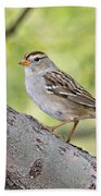 Immature White-crowned Sparrow  Bath Towel
