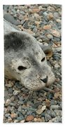 Injured Harbor Seal Bath Towel