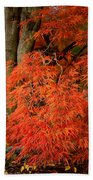 Japanese Maple In Autumn Bath Towel