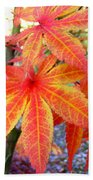 Japanese Maple Leaves 13 In The Fall Bath Towel