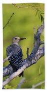 Juvenile Golden-fronted Woodpecker Bath Towel