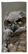 Juvenile Great Horned Owl Bath Towel