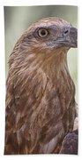 Juvenile Sea Eagle Bath Towel