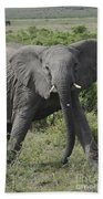 Kenya Masai Mara Charging Elephant  Bath Towel