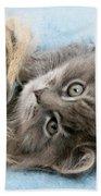 Kitten In Blanket Bath Towel