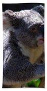 Koala In A Gum Tree Bath Towel