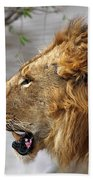 Large Male Lion Profile Portrait Bath Towel