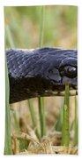 Large Whipsnake Coluber Jugularis Bath Towel