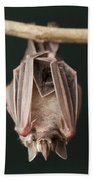 Leaf-nosed Bat Phyllostomidae, Amazon Bath Towel