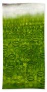Leaf Stomata, Lm Bath Towel