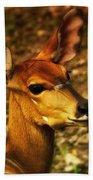 Lesser Kudu Bath Towel
