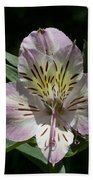 Lily - Liliaceae Bath Towel