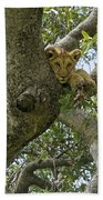 Lion Lookout Bath Towel