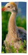 Little Sandhill Cranes Hand Towel
