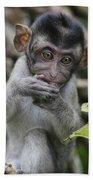 Long-tailed Macaque Macaca Fascicularis Bath Towel