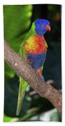 Lorikeet Bath Towel