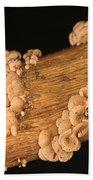 Luminescent Mushroom Panellus Stipticus Bath Towel