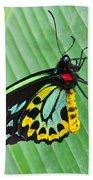 Male Cairns-birdwing Butterfly Bath Towel