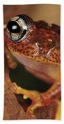 Mantellid Frog Boophis Tephraeomystax Bath Towel