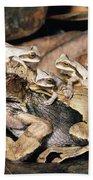 Marsupial Frog Gastrotheca Ovifera Bath Towel
