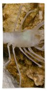 Mclanes Cave Crayfish Bath Towel