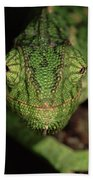 Mediterranean Chameleon Chamaeleo Bath Towel