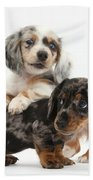 Merle Dachshund Pups Bath Towel