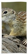 Mexican Ground Squirrel Bath Towel