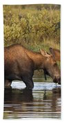 Moose Drinking In A Pond, Tombstone Bath Towel