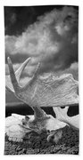 Moose Skull On Parched Earth Bath Towel