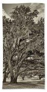 Moss-draped Live Oaks Sepia Toned Bath Towel