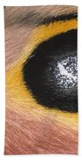 Moth Automeris Zozine Detail Of False Bath Towel