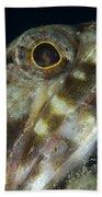 Mouth Of A Variegated Lizardfish, Papua Bath Towel
