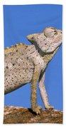 Namaqua Chameleon Chamaeleo Namaquensis Bath Towel