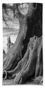 Natural Cypress Hand Towel