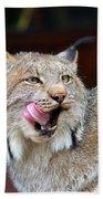 North American Lynx Bath Towel