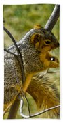 Nuts And Seeds Make A Great Lunch Bath Towel