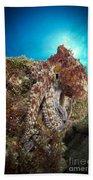 Octopus Posing On Reef, La Paz, Mexico Bath Towel
