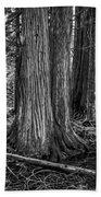 Old Growth Cedar Trees - Montana Bath Towel
