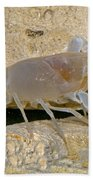 Orange Lake Cave Crayfish Bath Towel
