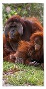 Orangutan Mother And Baby Bath Towel