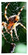 Orb Weaver And Lunch Bath Towel