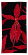 Orchid Renanthera Bella An Endangered Hand Towel