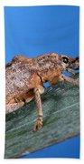 Oxyops Vitiosa Leaf Weevil On Melaleuca Bath Towel